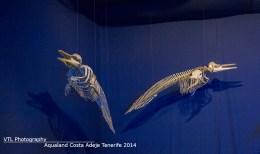 skeletten Dolfijnen in Dolfijn Museum Aqualand