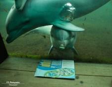Dolfijntjes Dolfinarium