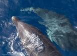 Close-up Dolphin