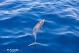 dolphin (2)