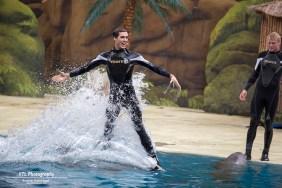 Dolfijnenshow (6)