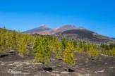 Pico Viejo & El Teide