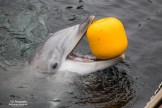 Dolfijn Dolfinarium Harderwijk