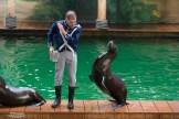 Dolfinarium Harderwijk zeeleeuwen