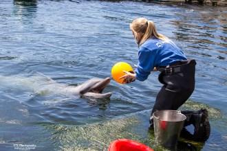 dolfinarium-dolfijnendelta