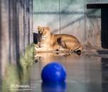 ayla-stichting-leeuw