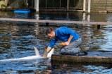 Dolfijnendelta dolfinarium Harderwijk 2017