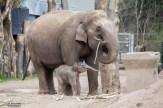 Olifanten DierenPark Amersfoort