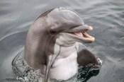 Dolfijn Finagain (2)
