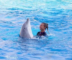 Marineland Antibes Dolphinshow