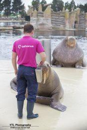 Walrussen Dolfinarium (3)
