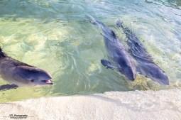 De drie bruinvissen bij elkaar