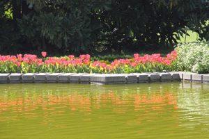 thổ nhĩ kỳ là quê hương của hoa tuplip