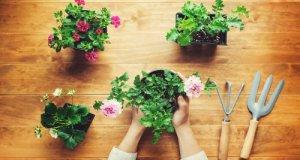 盆栽與花卉栽培有助於陶冶情操。