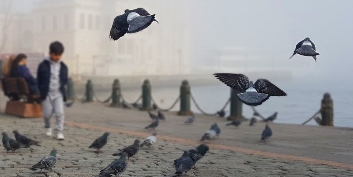 Pigeons in front of a mosque in Istanbul.