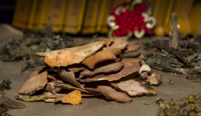Five different plant ingredients used in Traditional Chinese Medicine sit in piles on a table.