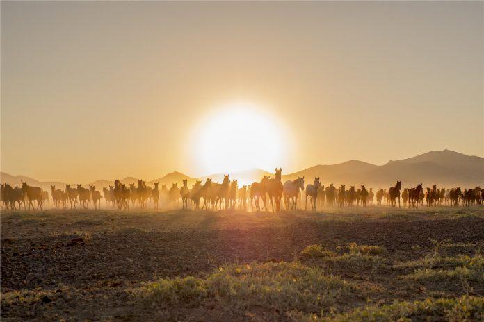 yilki_horses