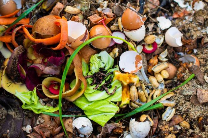 Worms wriggle on top of food scraps in a vermicompost bin.