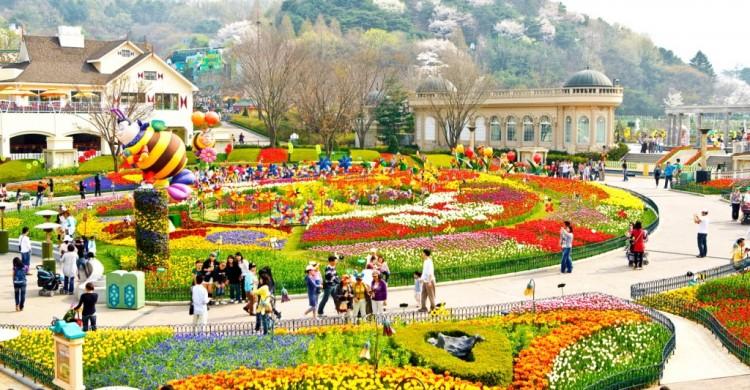 Du lịch Hàn Quốc le hoi hoa hong everland