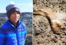 12-Year-Old Canadian Boy Finds 69-Million-Year-Old Dinosaur Fossil While Hiking