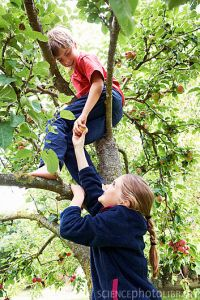 Children picking fruit in tree