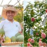 Ở nhà tránh dịch, Quyền Linh cùng vợ con lên sân thượng gỡ khoai lang, thu hoạch hoa trái