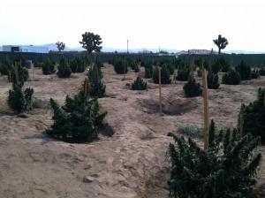 weedfarm3