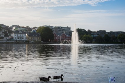 Stavanger's city center Braivatnet lake is home to ducks and swans and the walking path around it attracts lots of people, while the restaurants offer nice views.