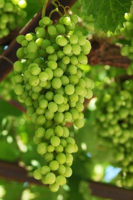 Verde Valley in Central Arizona Wineries – Who Would Have Thought