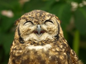 owl, wordbirds, Liesl Schillinger