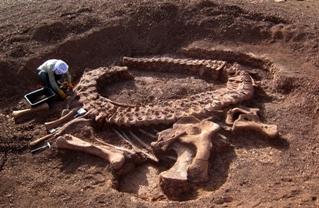 dinosaur, dig, paleontology