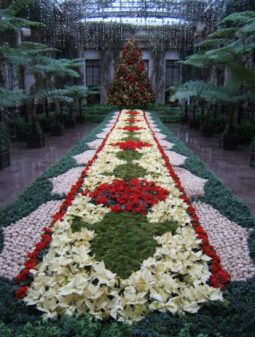 Longwood, Christmas, poinsettias