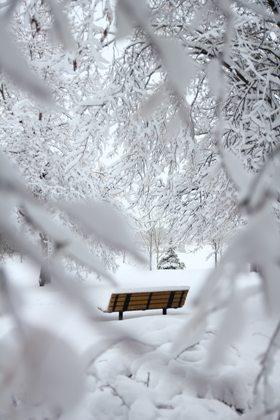 Park Bench, snow