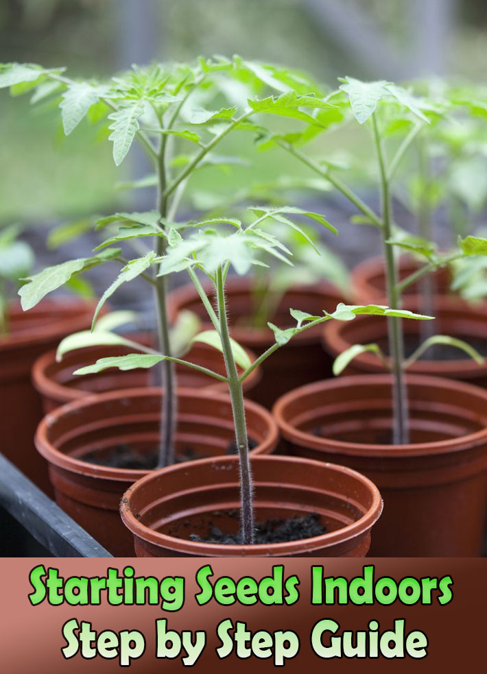 Starting Seeds Indoors – Step by Step Guide