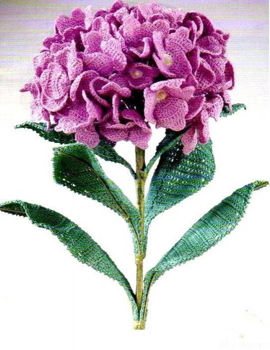 Hortensia الزهور