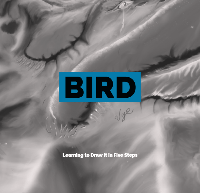 Bird: Learning to Draw it in Five Steps