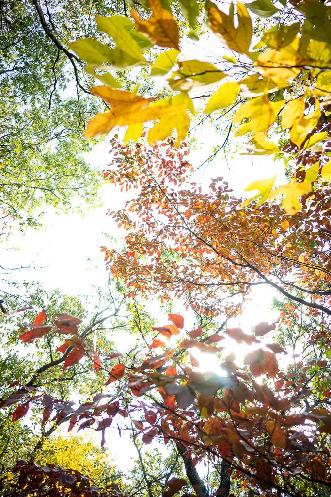Couleurs d'automne en Indiana