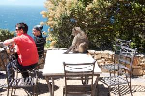 Stammgast im Two Ocean Restaurant