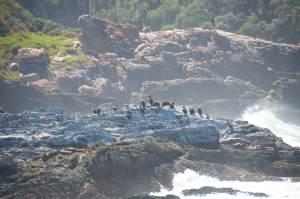 Seevögel in der Brandungsgischt