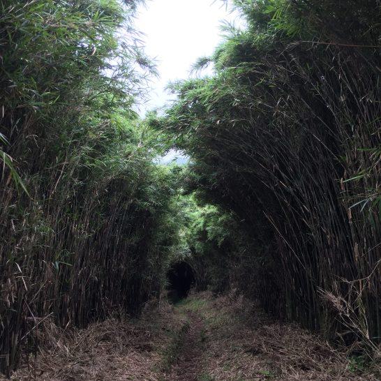 1242展望を阻む竹( ・´ー・`)