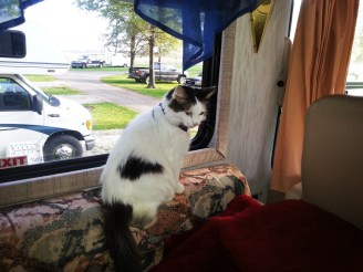 Kitty checking out the scenery...