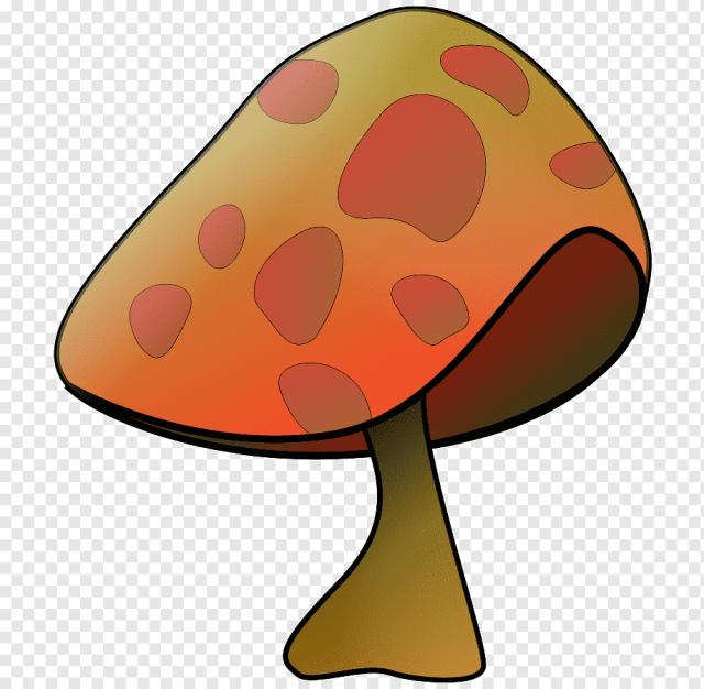 Jamur Jamur Turnip Jeruk Bebas Royalti Jamur Umum Png Pngwing