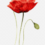 Red Flower Illustration Poppies Watercolor Painting Paper Drawing Creative Abstract Flowers Hand Painted Flowers Red Bouquet Flower Arranging Floral Plant Stem Png Pngwing