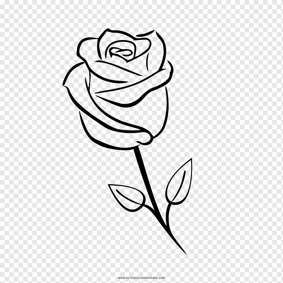 بالقلم الرصاص فراشة رسم وردة