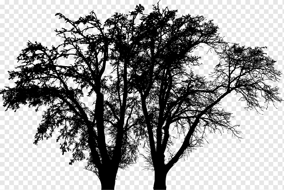Tree Branch Woody Plant Oak Arbre D Alignement Tree Branch Monochrome Silhouette Png Pngwing