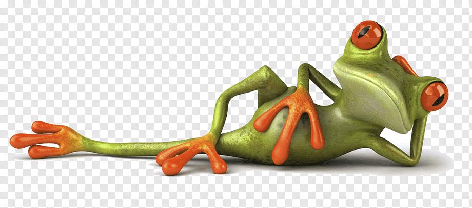 Whatsapp Hindi Zitat Humor Frosch Amphibie Tiere Susser Frosch