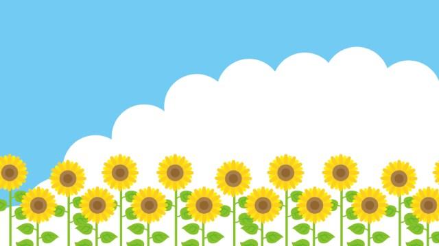 夏の始まり!ひまわり畑と青い空の包装紙