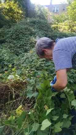 Removing vines