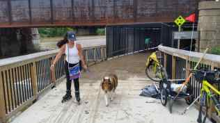 A woman on roller skates is on the trail with her collie. There are two trail ranger bikes to her right on the trail and there is a trail ranger behind her pushing mud off the trail at the boardwalk section under New York Ave.
