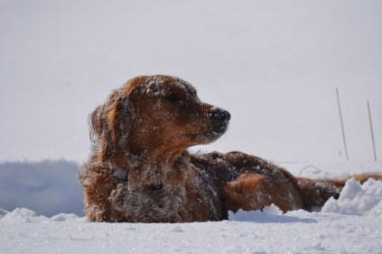 Banjo loves winter!